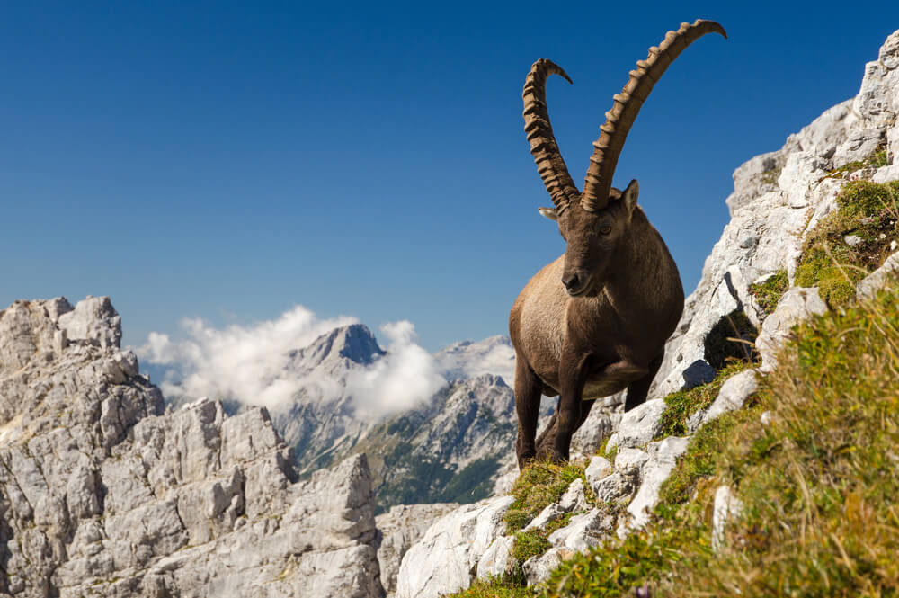 ibex agile 5 ways to make your business more agile
